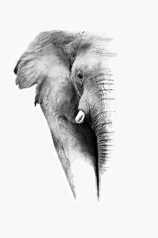 sovrumsinspiration elephant white
