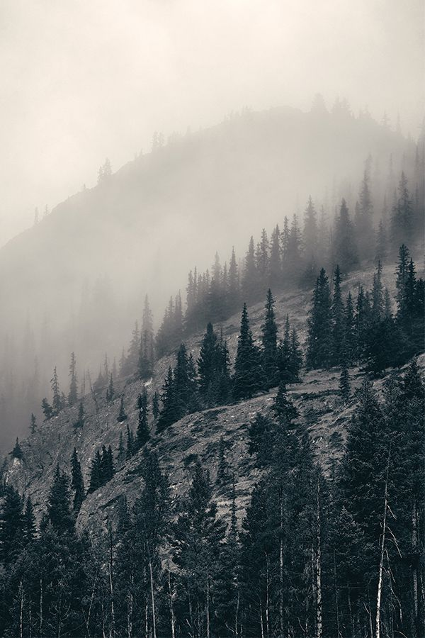sovrumsinspiration skog